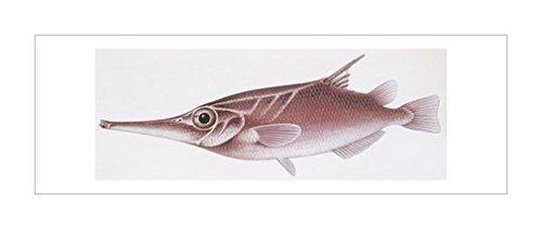 画|鱼|装饰艺术环境|自然科学|海洋生物风格|动物学|风景装饰画|海洋