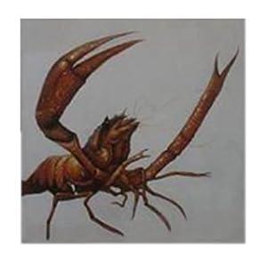 手绘彩色铅笔龙虾