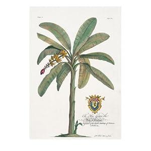 进口装饰画 香蕉树