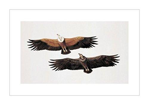动物装饰画|装饰艺术环境|鸟类风格|动物学|动物装饰