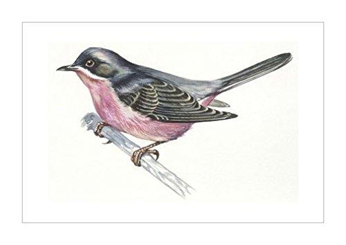 风景装饰画|动物装饰画分类|鸟类|野生动物|生物学|花卉植物类型|自