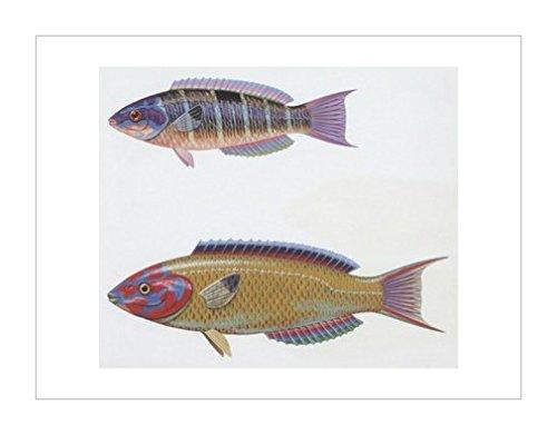环境|动物学|风景装饰画|海洋生物|生物学|自然科学