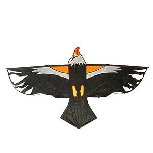 老鹰的颜色简笔画
