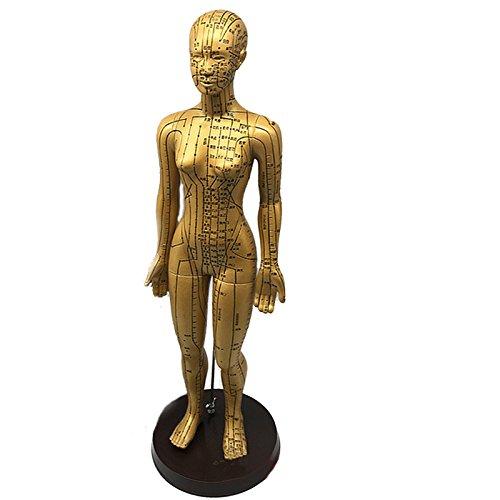 色人体高清_伟叶 人体经络穴位模型 铜色高清针灸模型 中医针灸人体模型 (女模型