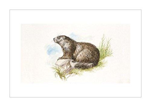 画|装饰艺术环境|动物学|风景装饰画|动物装饰画