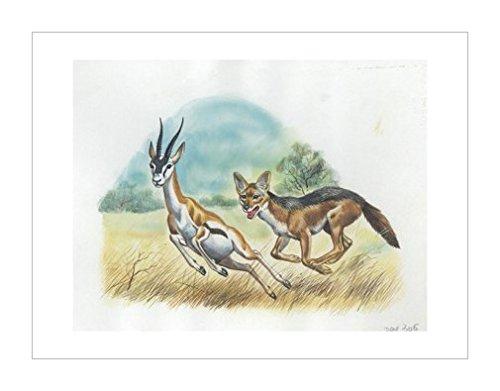 羚羊|跑步|图示和插图装饰画|装饰艺术环境|动物学