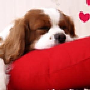 可爱小狗动态壁纸-亚马逊应用商店-亚马逊中国