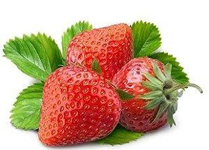 sprout 我要发芽 水果种子 盆栽草莓种子 洋莓 地莓 地果 红莓 草莓籽