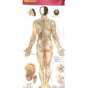 《人体穴位标准挂图 中英文对照>高血压病保健图解