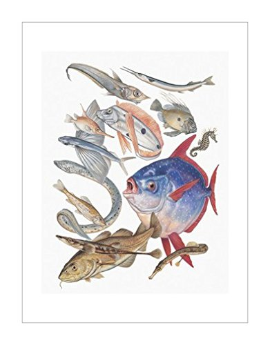 画|鱼|装饰艺术环境|海洋生物风格|动物学|海洋生物