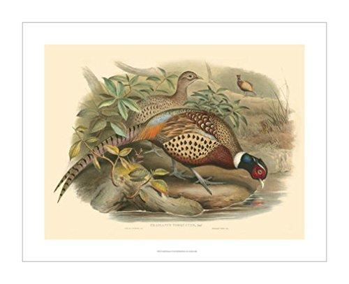 动物装饰画|装饰艺术环境|鸟类风格|动物装饰画分类