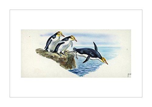 环境|动物学|风景装饰画|海景|海边景色|景观风格|生