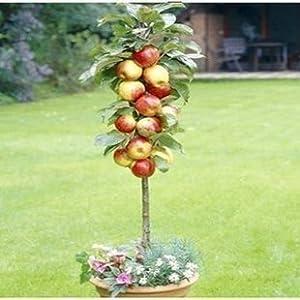 什么时候种苹果树最好,苹果树最佳种植时间