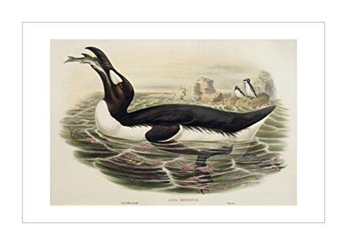画|鱼|湖泊|装饰艺术环境|文学|动物学|海洋生物|人