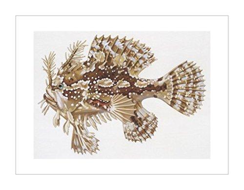 环境|自然科学|海洋生物风格|动物学|风景装饰画