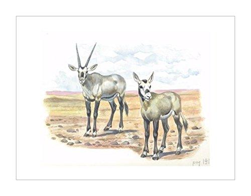 动物宝宝|图示和插图装饰画|动物类别|装饰艺术环境