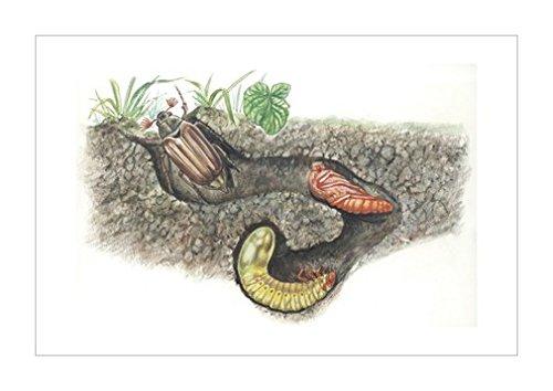 画|装饰艺术环境|动物学|风景装饰画|景观风格|生物