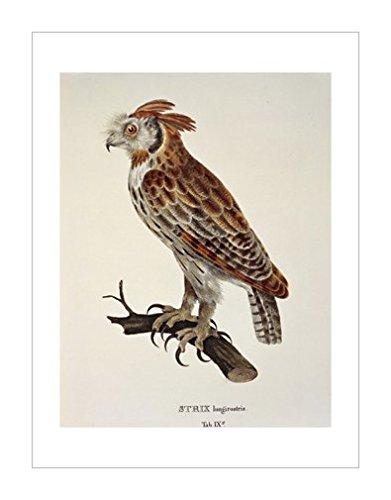 环境|鸟类风格|动物学|动物装饰画分类|鸟类|动物