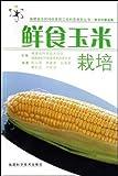 鲜食玉米栽培-图片