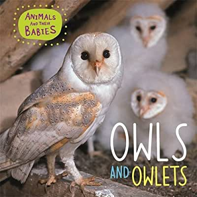 Animals & their Babies: Owls & Owlets.pdf