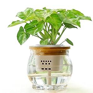 室内盆栽多久施肥?施什么肥?_给盆栽植物施肥多少天一次?