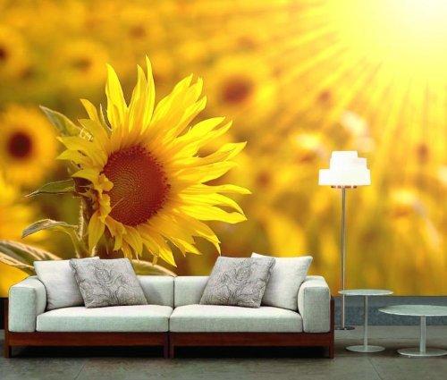 韩国手绘向日葵背景