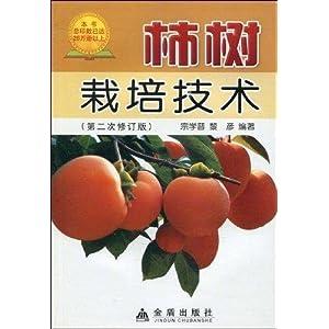 柿子树寄生茶功效与作用图片_柿树挂果图片_柿树寄生_柿树花苞_柿树造型_