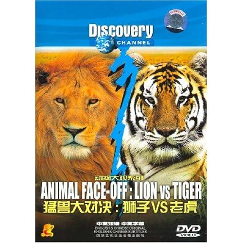 猛兽大对决:狮子vs老虎)