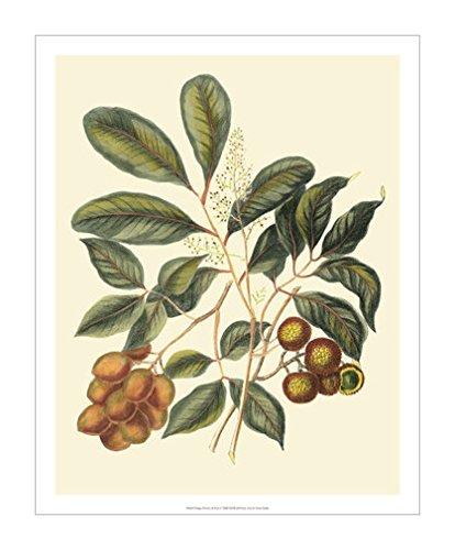 原版进口装饰画 树叶,花卉和水果 i【foliage, flowers & fruit i】