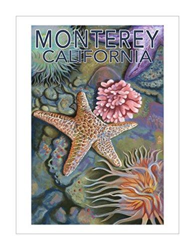灯笼出版社|海洋生物风格|加利福尼亚|海洋生物|动物装饰画分类|动物