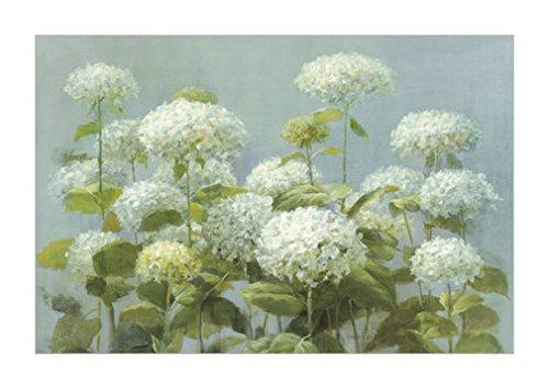 原版进口装饰画 白色绣球花园【white hydrangea garden】 91x61cm