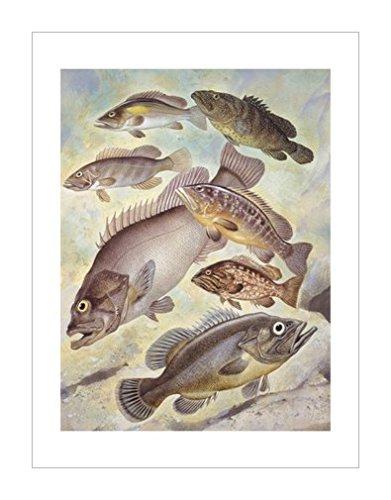 环境|动物学|风景装饰画|海洋生物|景观风格|生物学