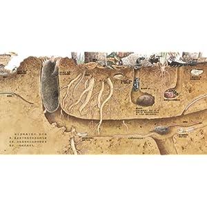 《地底下的动物》是启发精选世界优秀畅销绘本系列之一,适合3岁以上