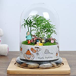 依雯然 创意礼物 室内装饰 diy苔藓微景观生态瓶 新奇