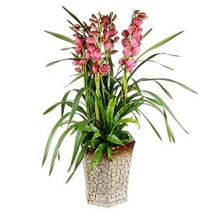 植物一生的生长变化要经历的过程是 种子,发芽,生长,然后呢 一共