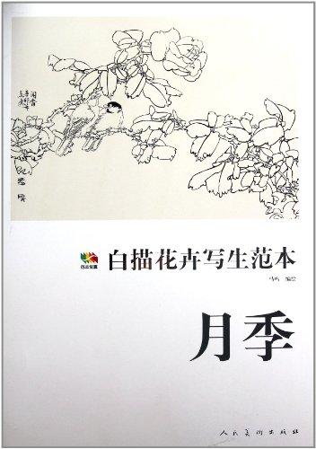 白描花卉写生范本 月季图片