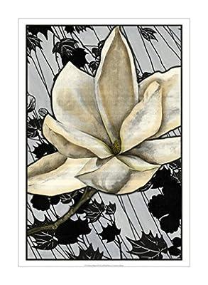 白玉兰图案 ii【patterned magnolia ii】 47x68cm 木兰|白色的花装饰