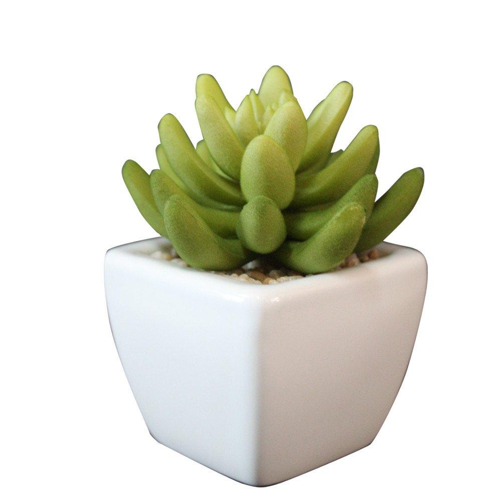 迷你小盆栽 11cmpe多肉莲状植物仿真绿色盆景
