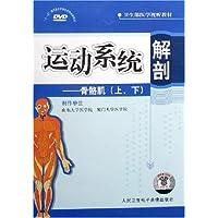 运动系统解剖骨骼肌上下