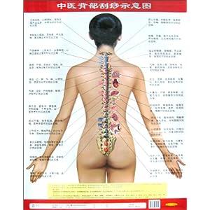 中医背部刮痧高清 中医背部刮痧 背部刮痧的方法图解