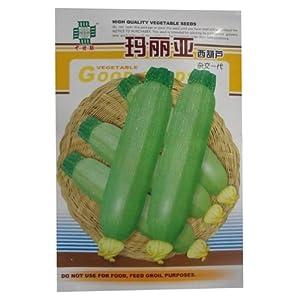 白瓜,番瓜,美洲南瓜,云南小瓜,菜瓜,荨瓜 家庭种植实用装 阳台室内