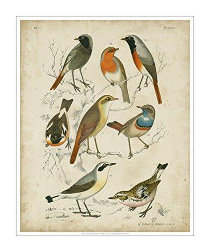 画|动物风格|鸟类|野生动物风格|野生动物|装饰画分类|装饰画|动物