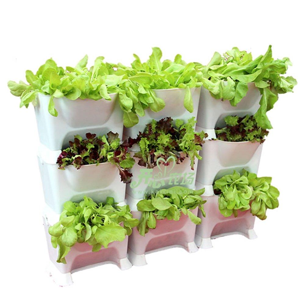 阳台种菜怎样保湿夏天怎样种菜