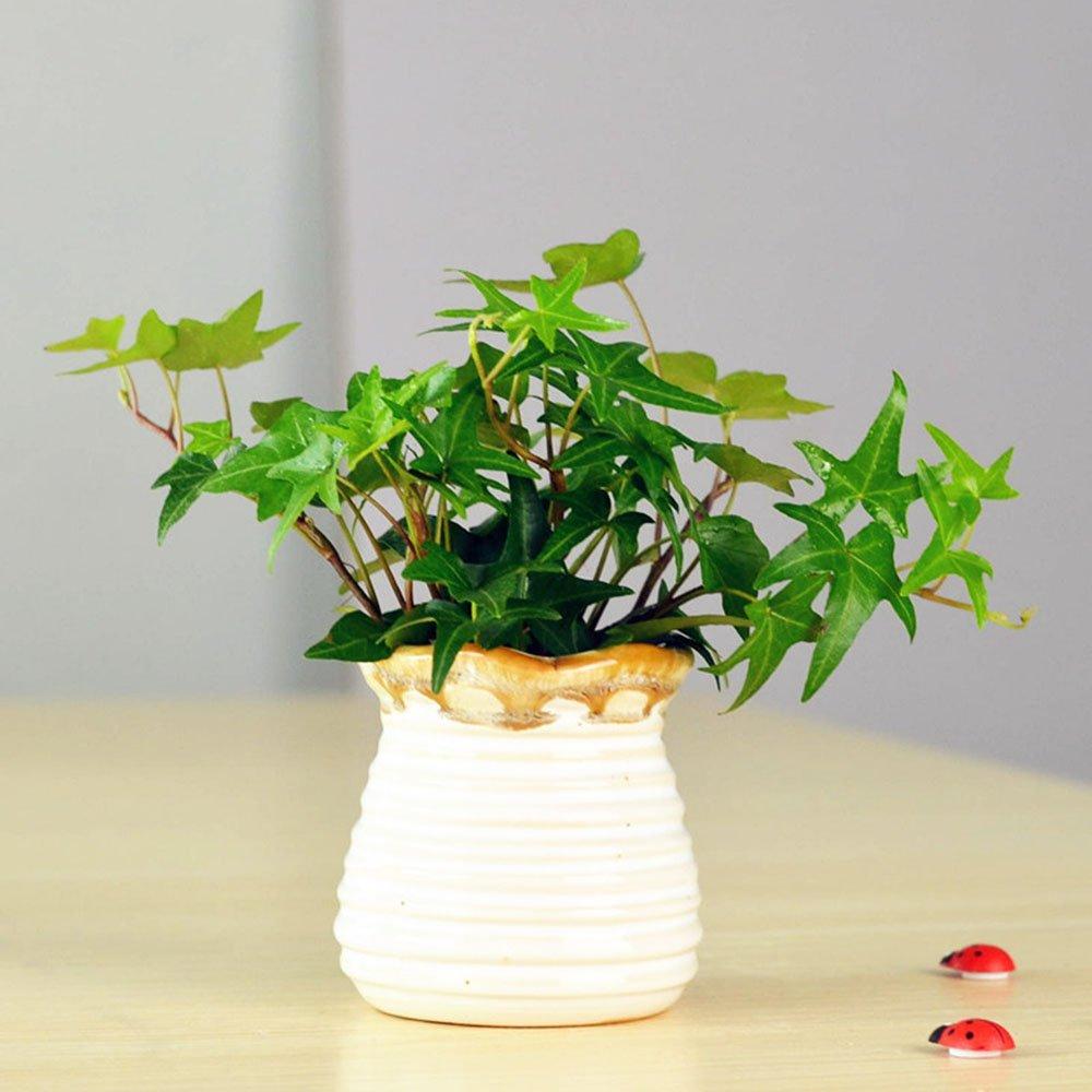 豁新 观叶垂吊植物 常春藤 小盆栽 绿植 常青藤吊兰 净化空气