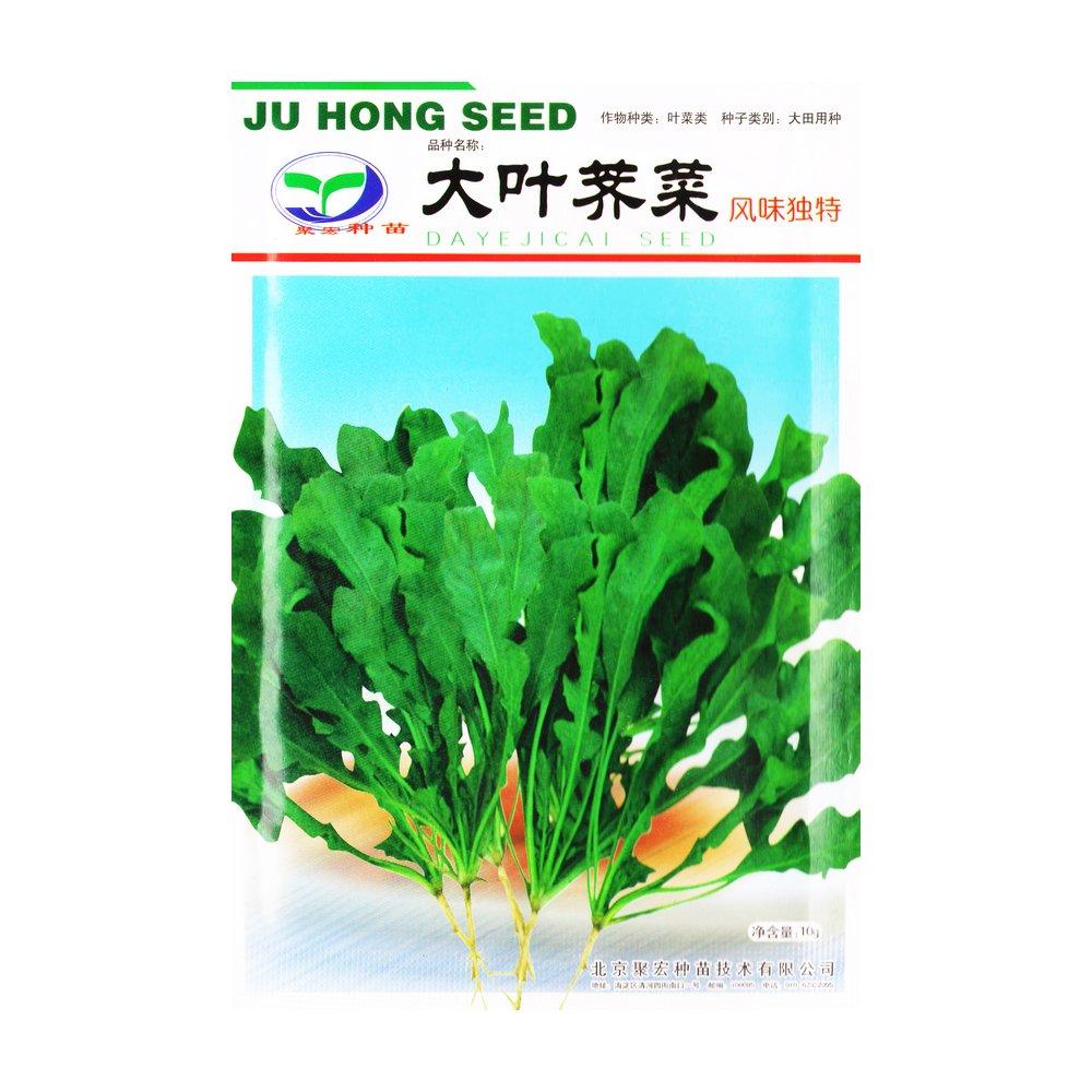 大叶荠菜 种子 10g - 特菜 叶菜 叶菜 家庭 种植