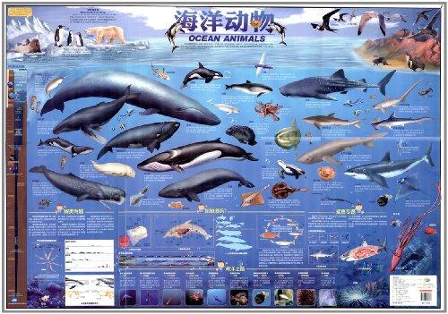 儿童房专用挂图:海洋动物图片