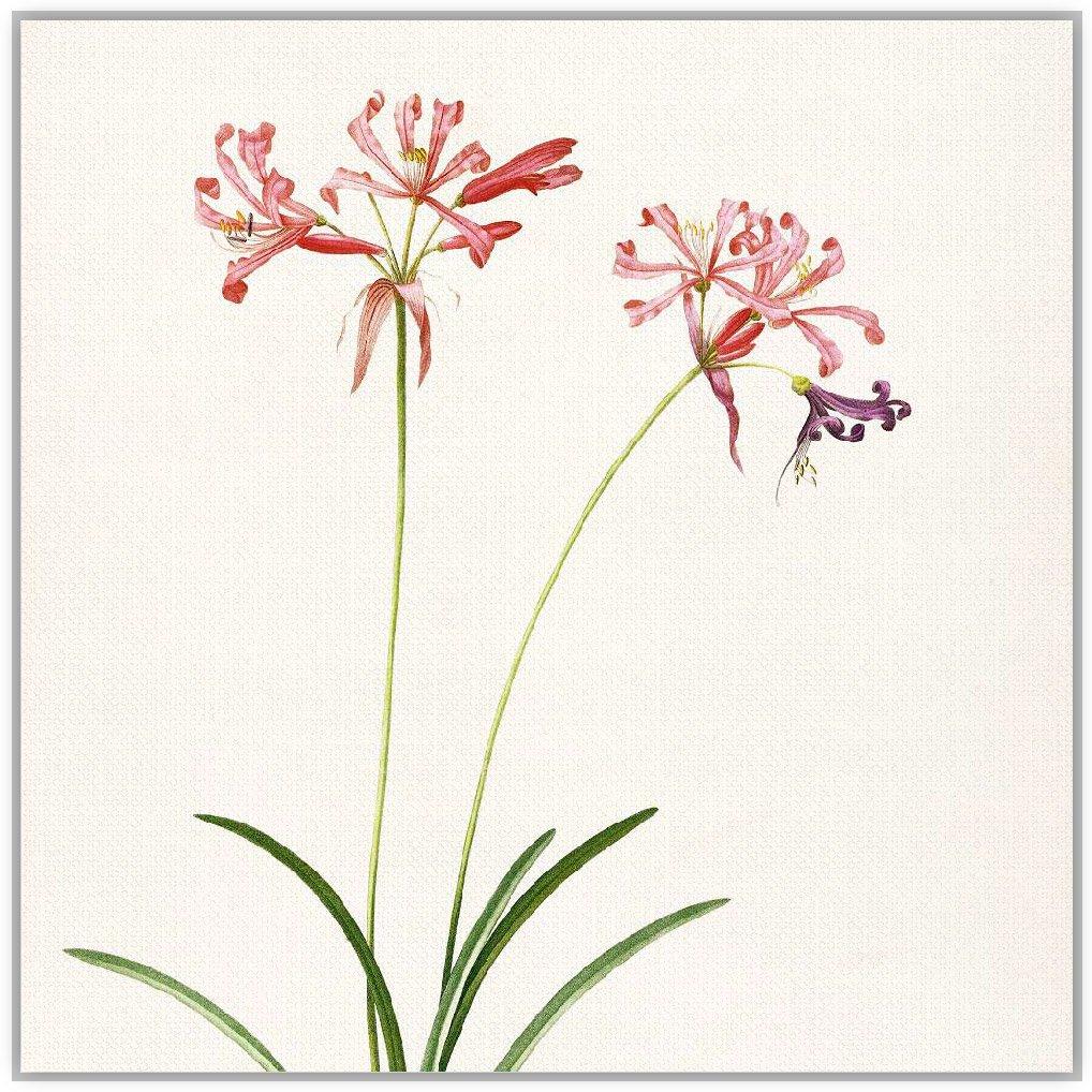 文艺清新手绘花卉
