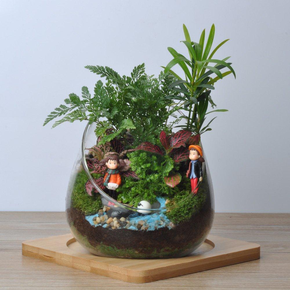 依雯然 盆栽植物 花卉盆景 创意diy生日情人节礼品 苔藓微景观生态瓶