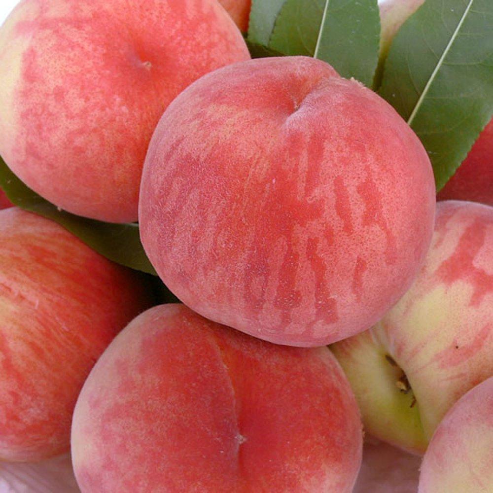 新鲜水果平谷大桃大久保桃子生态水蜜桃 12个礼盒装