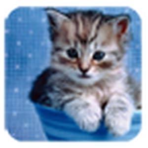 超可爱小猫咪第四辑主题壁纸-亚马逊应用商店-亚马逊
